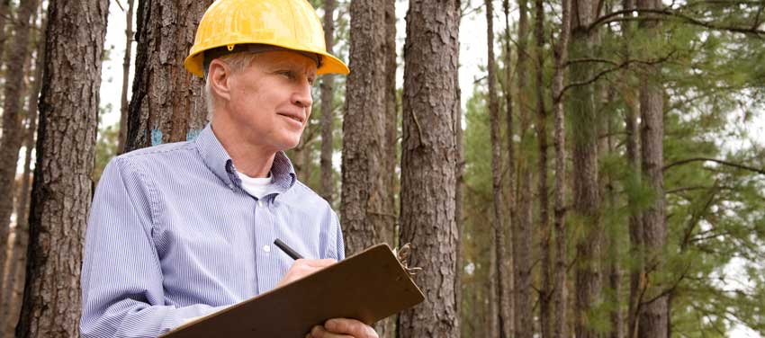 Man takes notes on commercial real estate timber