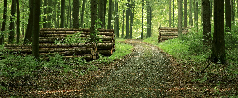 inversiones madereras con Recursos naturales de Regions y el Grupo de bienes raíces