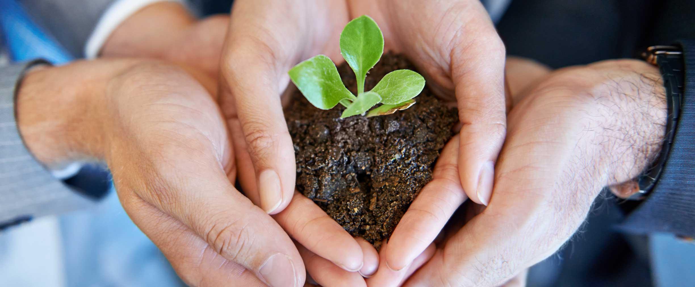 Bonos verdes: ¿una inversión en el medioambiente con una rentabilidad sólida?