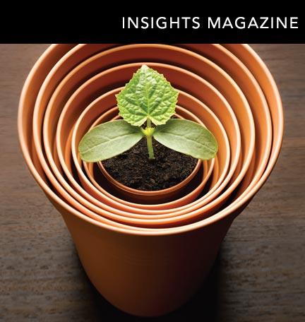 Revista Insights de primavera de 2016