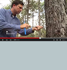 hombre en un bosque de pinos que representa los recursos naturales